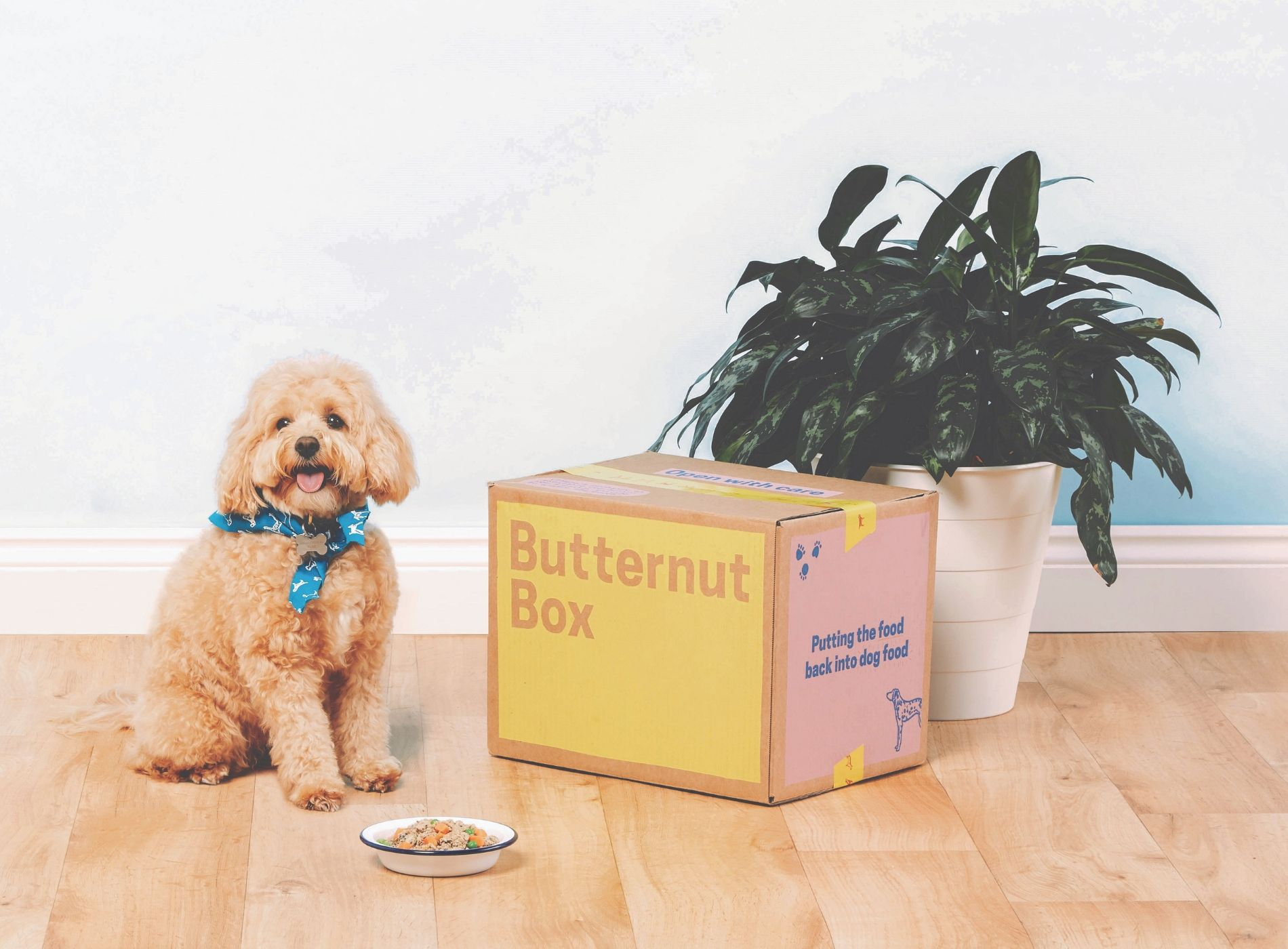 Dog beside a Butternut box
