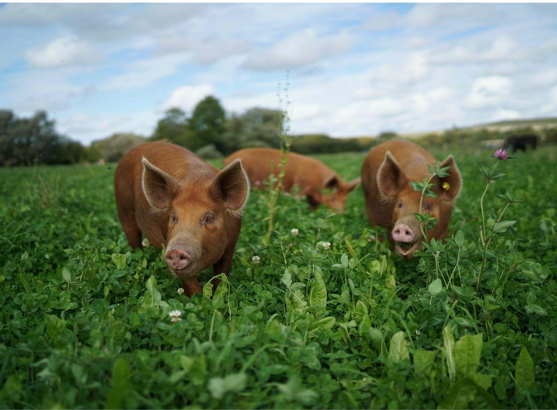 Horton farm residents