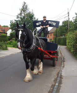 Wadworth Shire Horse